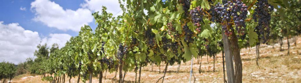 vinos de rioja alavesa