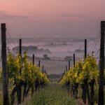 Peliculas sobre vino