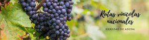 Rutas vinícolas nacionales