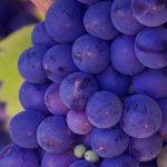 Bodega de vinos ecológicos